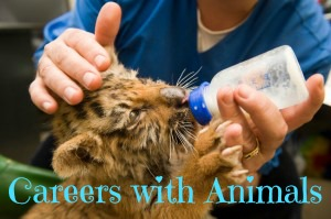Careers with Animals button