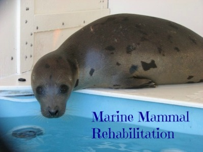 Marine Mammal Rehabilitation button