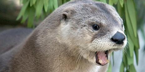 mammal_north-american-river-otter_600x300